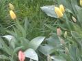 2012-04-13-18-38-19